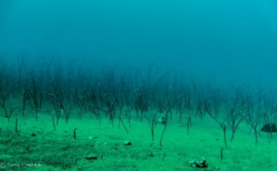 A field of garden eels