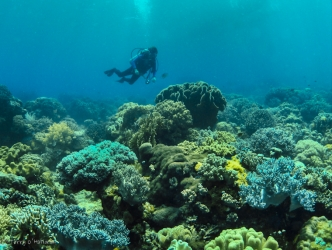 Beautiful live reef in shallow water