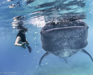 Ann swimming next to young Whale Shark