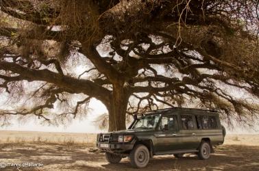 Seeking shade on the Serengeti plains, Tanzania, Africa