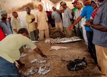 Fish Auction, Zanzibar