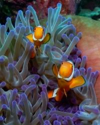 Nemo & Friend