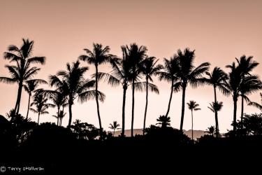 Maui Silhouette