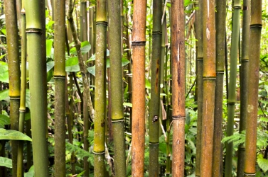 My favorite bamboo forest, Oahu
