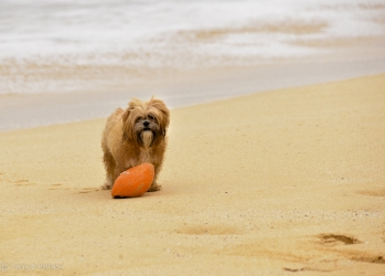 This dog was playing by himself with his ball