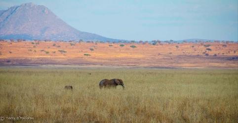 Elephant & Baby at Sunset